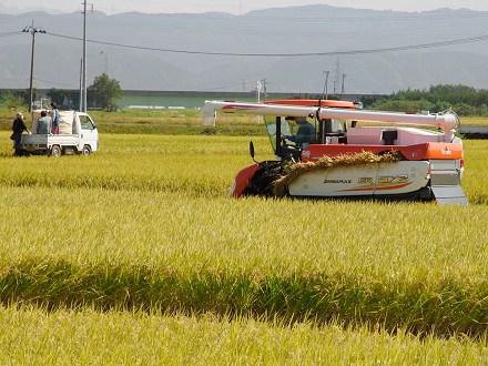 山形県酒田市の稲刈り風景