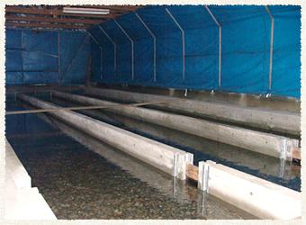遊農くらぶ鮭孵化事業の紹介No.3