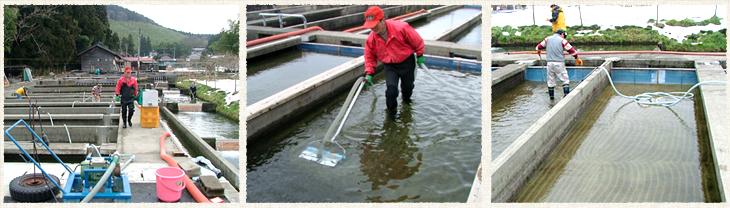 遊農くらぶ鮭孵化事業の紹介No.6